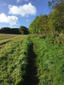 Farm Footpath in Mylor